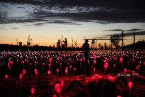 Field of Light Uluru - Pubs Melbourne
